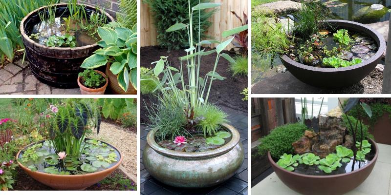 12 tipů, jak vytvořit úchvatný mini rybníček v květináči