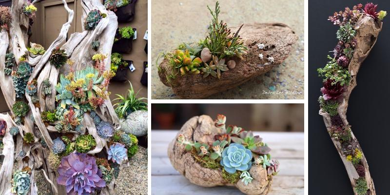 17 tipů na nádherné dekorace ze sukulentů a dřeva